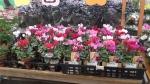Pasar bunga yang dikemas cantik