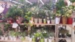 Pasar bunga cantik, Karatsu 1
