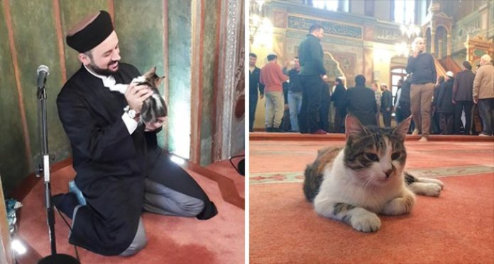 Cat at Istambul Mosque